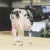 OntarioSpring17_Holstein_IMG_4822