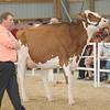 OntarioSummer2017_Holstein_1M9A3189