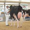 OntarioSummer2017_Holstein_1M9A3106