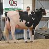 OntarioSummer2017_Holstein_1M9A2994