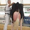 OntarioSummer2017_Holstein_1M9A3223