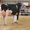 OntarioSummer2017_Holstein_1M9A2992