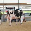 OntarioSummer2017_Holstein_1M9A3030