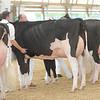 OntarioSummer2017_Holstein_1M9A3210