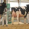 OntarioSummer2017_Holstein_1M9A3082