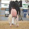 OntarioSummer2017_Holstein_1M9A3107