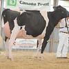 OntarioSummer2017_Holstein_1M9A3039