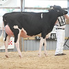 OntarioSummer2017_Holstein_1M9A2757