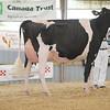 OntarioSummer2017_Holstein_1M9A3042