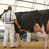 OntarioSummer2017_Holstein_1M9A3103