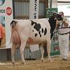 OntarioSummer2017_Holstein_1M9A2949