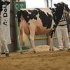 OntarioSummer2017_Holstein_1M9A3081