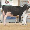 OntarioSummer2017_Holstein_1M9A2970