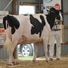 OntarioSummer2017_Holstein_1M9A3254