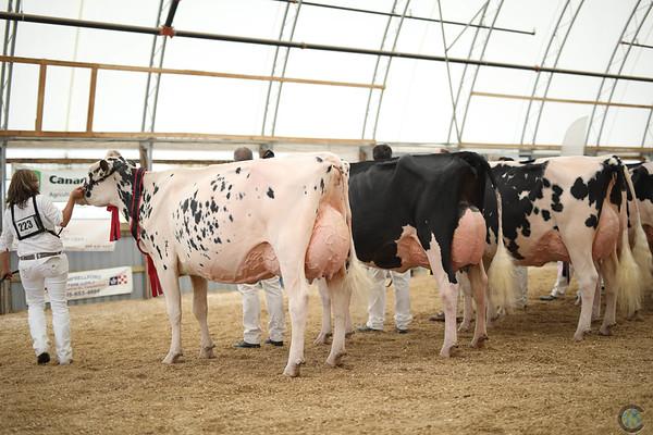 OntarioSummer2017_Holstein_1M9A3168