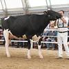 OntarioSummer2017_Holstein_1M9A2990