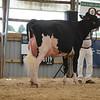 OntarioSummer2017_Holstein_1M9A2855