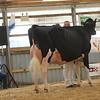 OntarioSummer2017_Holstein_1M9A3045