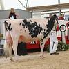 OntarioSummer2017_Holstein_1M9A3029