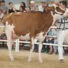 OntarioSummer2017_Holstein_1M9A3191