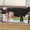 OntarioSummer2017_Holstein_1M9A2877