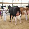 OntarioSummer2017_Holstein_1M9A2847