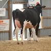 OntarioSummer2017_Holstein_1M9A2961
