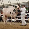OntarioSummer2017_Holstein_1M9A2991