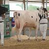 OntarioSummer2017_Holstein_1M9A2971
