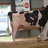 OntarioSummer2017_Holstein_1M9A3177