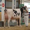 OntarioSummer2017_Holstein_1M9A2950