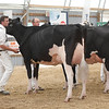 OntarioSummer2017_Holstein_1M9A3211
