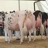 OntarioSummer2017_Holstein_1M9A3248