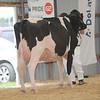 OntarioSummer2017_Holstein_1M9A3117