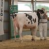 OntarioSummer2017_Holstein_1M9A2951