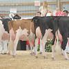 OntarioSummer2017_Holstein_1M9A3216