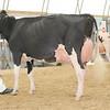 OntarioSummer2017_Holstein_1M9A3097