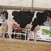OntarioSummer2017_Holstein_1M9A2880
