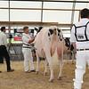 OntarioSummer2017_Holstein_1M9A2904