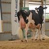 OntarioSummer2017_Holstein_1M9A3084