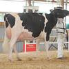 OntarioSummer2017_Holstein_1M9A3188