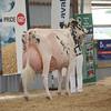 OntarioSummer2017_Holstein_1M9A3122