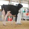 OntarioSummer2017_Holstein_1M9A2978