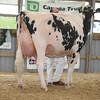 OntarioSummer2017_Holstein_1M9A3127