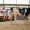 OntarioSummer2017_Holstein_1M9A2900