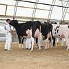 OntarioSummer2017_Holstein_1M9A2998