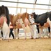 OntarioSummer2017_Holstein_1M9A2842