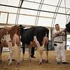 OntarioSummer2017_Holstein_1M9A2839