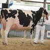 OntarioSummer2017_Holstein_1M9A3056