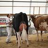 OntarioSummer2017_Holstein_1M9A2837